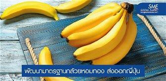 กล้วยหอมทองผลไม้ยืนหนึ่ง ตลาดญี่ปุ่นต้องการสูง
