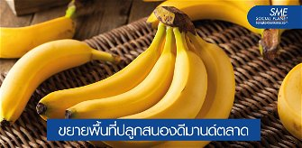 ตลาด 'กล้วยหอม' เติบโตสดใส