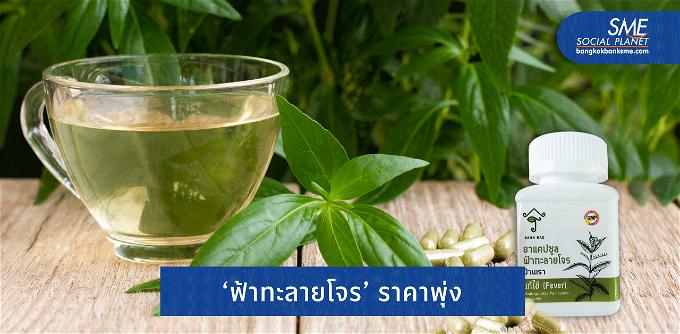 โควิดพลิกโอกาส 'ฟ้าทะลายโจร' บูมตลาดสมุนไพรไทย